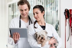 Male and female veterinarian using digital tablet royalty free stock images