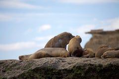 Sea lions on the rock in the Valdes Peninsula, Atlantic Ocean, Argentina stock photo