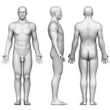 Male figure in anatomical posterior,front and side Stock Photos