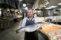Male fishmonger wearing an apron holding large and whole salmon. Fish in front of display counter early in the morning on a market in England Royalty Free Stock Images