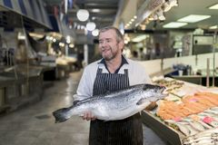 Male fishmonger wearing an apron holding large and whole salmon. Fish in front of display counter early in the morning on a market in England Royalty Free Stock Image