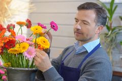 Male florist arranging flowers in pot Stock Photo