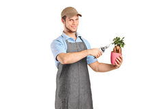 Male florist cutting a bonsai tree Royalty Free Stock Photography