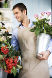 Male florist in his shop, holding a pot of pink roses Royalty Free Stock Image