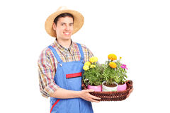 Male florist holding a basket with plants Royalty Free Stock Photo