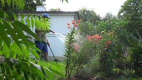 Male florist man watering orange lily flowers with hose sprayer tool in house yard. 4K stock footage
