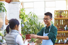 Male Florist Talking to his Customer in the shop Stock Photos