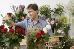 Male florist working in flower shop, checking red rose, smiling Stock Photos