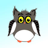 Male fluffy owl Royalty Free Stock Photo