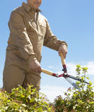 Male gardener cutting a bush with scissors Royalty Free Stock Photo