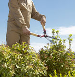 Male gardener cutting a plant in a park. Vertical format Stock Image