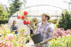 Male gardener examining flower pot with colleague standing in background outside greenhouse Stock Photography