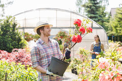 Male gardener examining flower pot with colleague standing in background outside greenhouse Stock Image