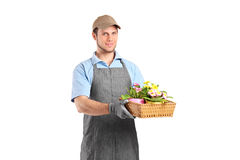 Male gardener holding a basket with flower pots Royalty Free Stock Photos