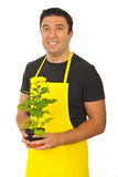 Male gardener holding chrysanthemum Royalty Free Stock Photography