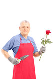 Male gardener holding a rose flower and gardening equipment. Isolated on white background Royalty Free Stock Images