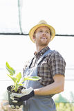 Male gardener looking away while holding potted plant at greenhouse Stock Images