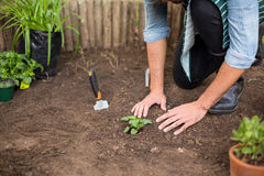Male gardener planting at greenhouse. Low section of male gardener planting at greenhouse Stock Image