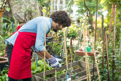 Male gardener planting outside greenhouse royalty free stock photo