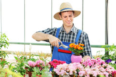 Male gardener pruning flowers Stock Photos