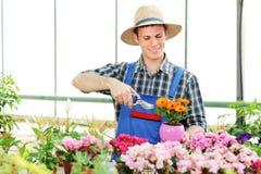 Male gardener pruning flowers Stock Photos