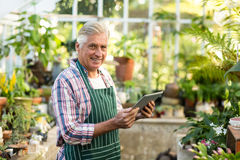 Male gardener smiling while using digital tablet. Portrait of male gardener smiling while using digital tablet at greenhouse Stock Image