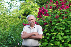 Male gardener in the spring garden Stock Image