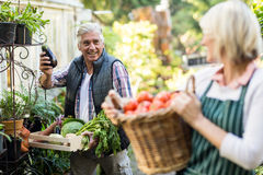 Male gardener with vegetables looking at woman Stock Images