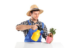 A male gardener watering a bonsai tree Stock Photo