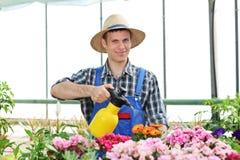 Male gardener watering flowers in a garden Stock Images