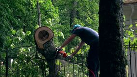 Male gardener working on felled tree with chain saw. 4K stock video footage