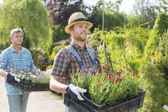 Male gardeners walking while carrying flower pots in crates at plant nursery Stock Photography