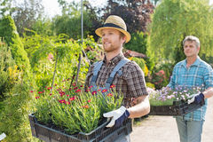 Male gardeners walking while carrying flower pots in crates at plant nursery Royalty Free Stock Images