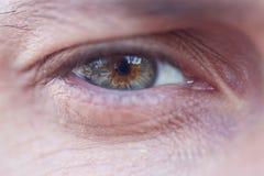Male grey eye Stock Photography