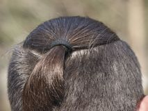 Male haircut pigtail, close-up on a nature background. stock images