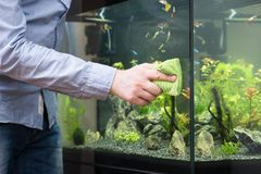 Male hand cleaning aquarium glass. Male hand cleaning aquarium using microfiber towel stock photo