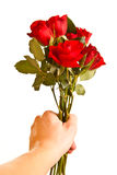 Male hand giving roses isolated Stock Image