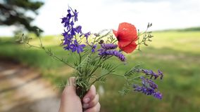 Male hand holding a bouquet of wildflowers. Summer vacation concept. Closeup shot stock footage