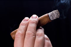 Male hand holding cigar Stock Image