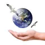 Male hand holding the earth with birds Stock Photography