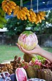 Male hand holding fruit Royalty Free Stock Images