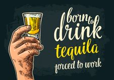 Male hand holding glass rum. Born to drink. Male hand holding glass. Born to drink tequila forced to work lettering. Vintage color engraving illustration for royalty free illustration