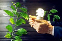 Hand holding light bulb next to the green tree Stock Photography