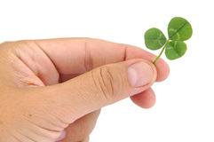 Male hand holding green clover leaf isolated on a Stock Images