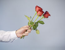 Male hand holding out three red roses Stock Images