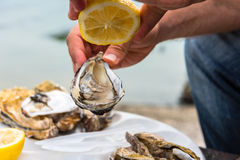 Male hand holding oysters Stock Photography
