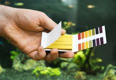Male hand holding PH tests. In front of freshwater aquarium royalty free stock image