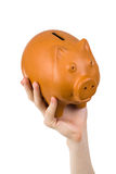Male hand holding piggy bank Stock Images
