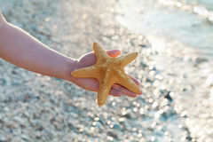 Male hand holding a starfish or sea star against summer bokeh background. Male hand holding a starfish or sea star against summer bokeh background Royalty Free Stock Image