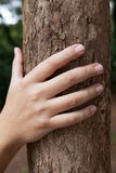 Male hand holding tree trunk Stock Photography